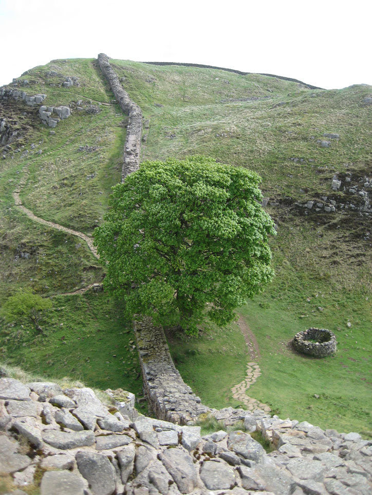 Robin Hood's tree